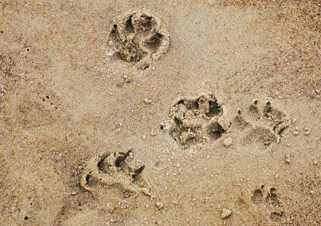 Des traces de pattes (image d'illustration)
