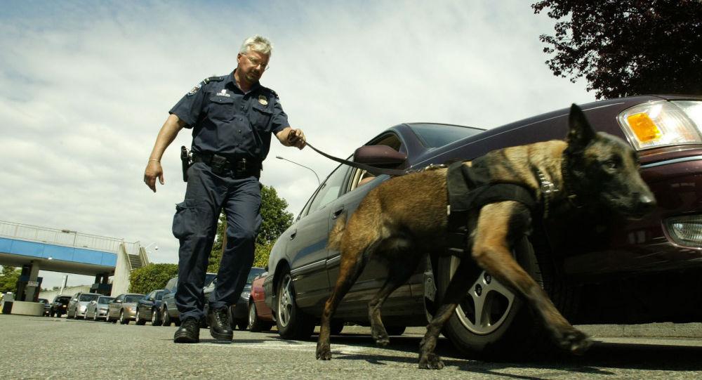 Un chien renifleur à la frontière canadienne.