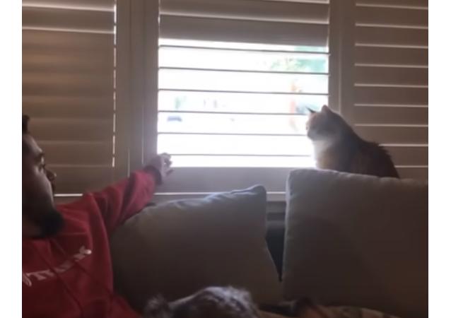 Un chat têtu montre à son maître qui est le vrai chef à la maison