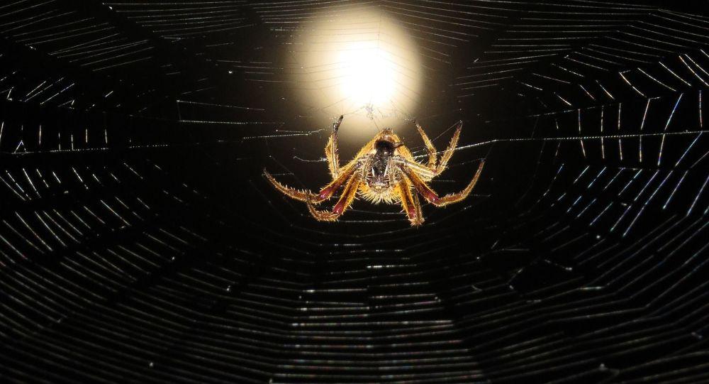 araignée (image d'illustration)