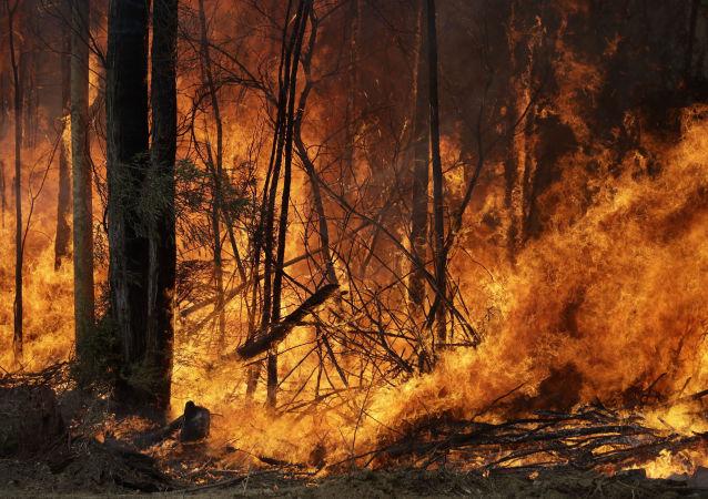 Feux de brousse en Australie, le 8 janvier 2020