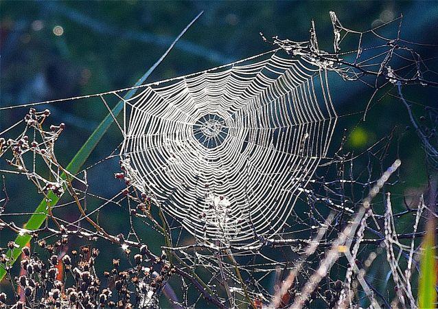 Une toile d'araignée (image d'illustration)