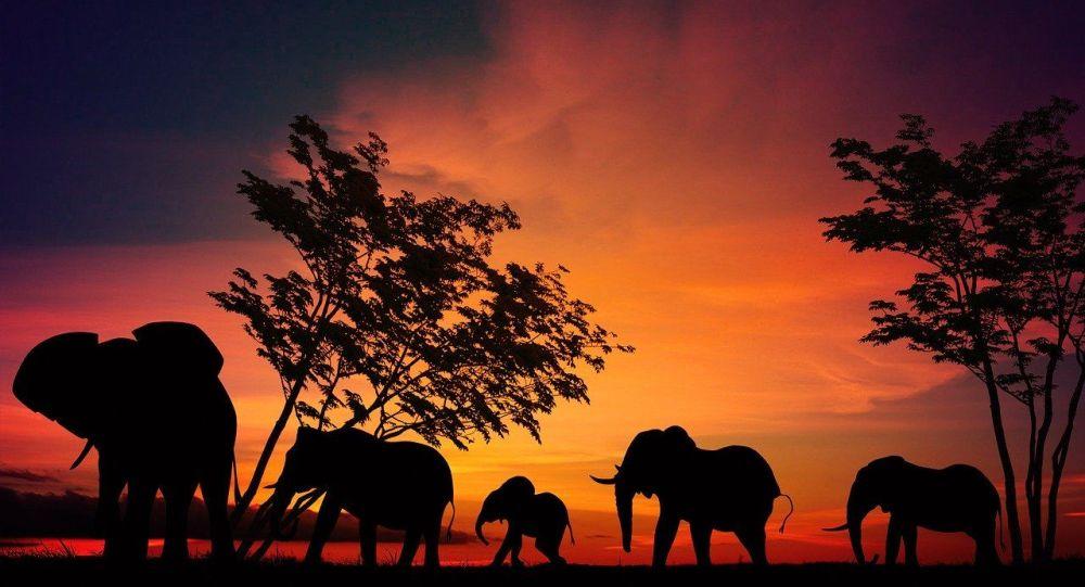 Deux éléphants prennent en chasse des touristes dans un parc national - vidéo