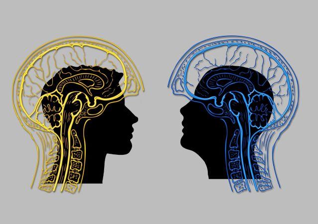 Cerveau (image d'illustration)