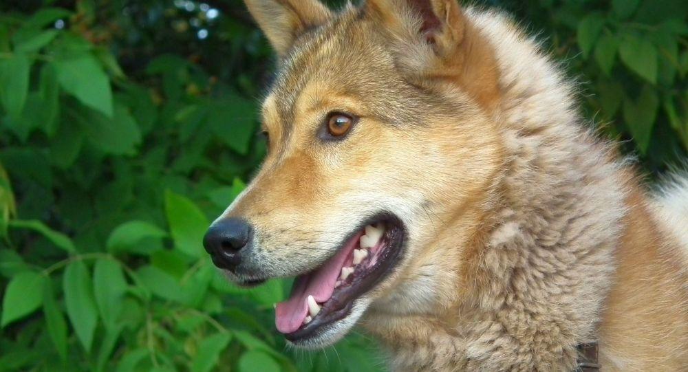 Un chien errant sauve des touristes perdus en pleine jungle - images