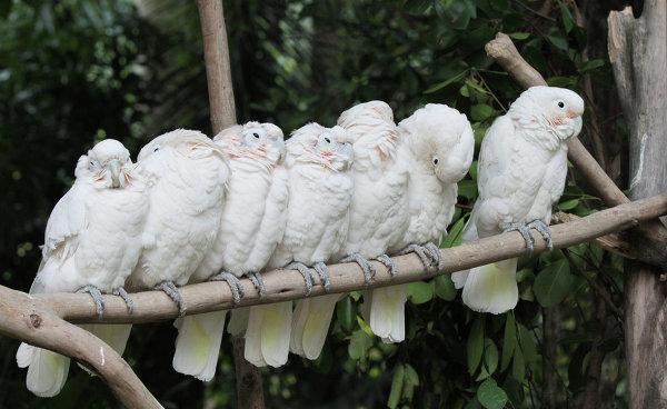 Попугаи в ChimeLong Safari Park в Китае