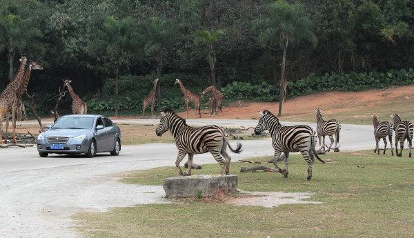 ChimeLong Safari Park в Китае