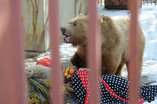 В Екатеринбургском зоопарке чучело Масленицы отдали медведю